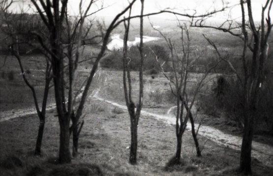 Photographie d'arbres, chemin et rivière