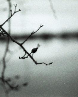 Photographie d'un fruit sur une buisson devant un lac