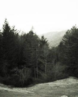 Photographie d'une forêt dans les montagnes
